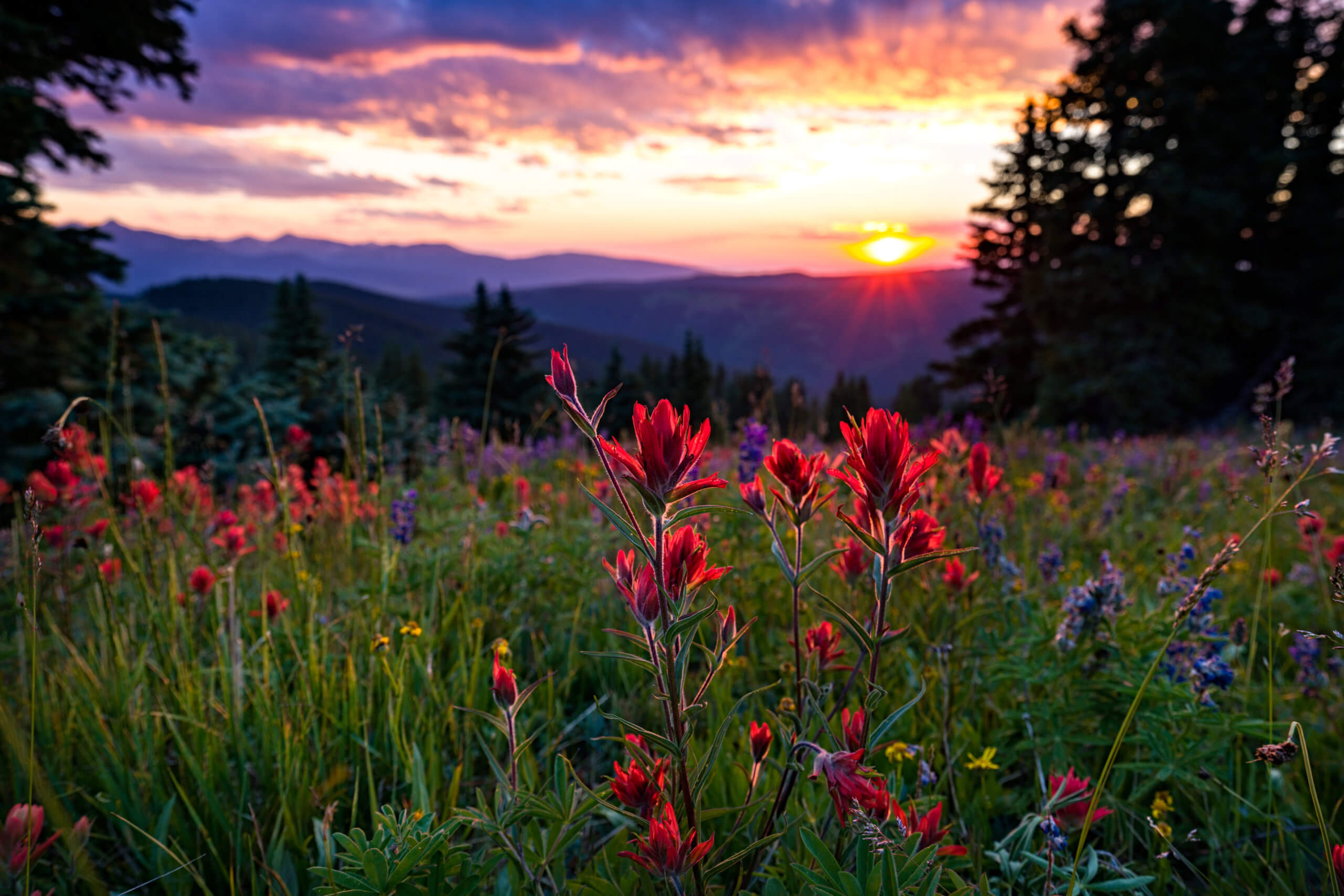 Wildflowers in Mountain Meadow at Sunset