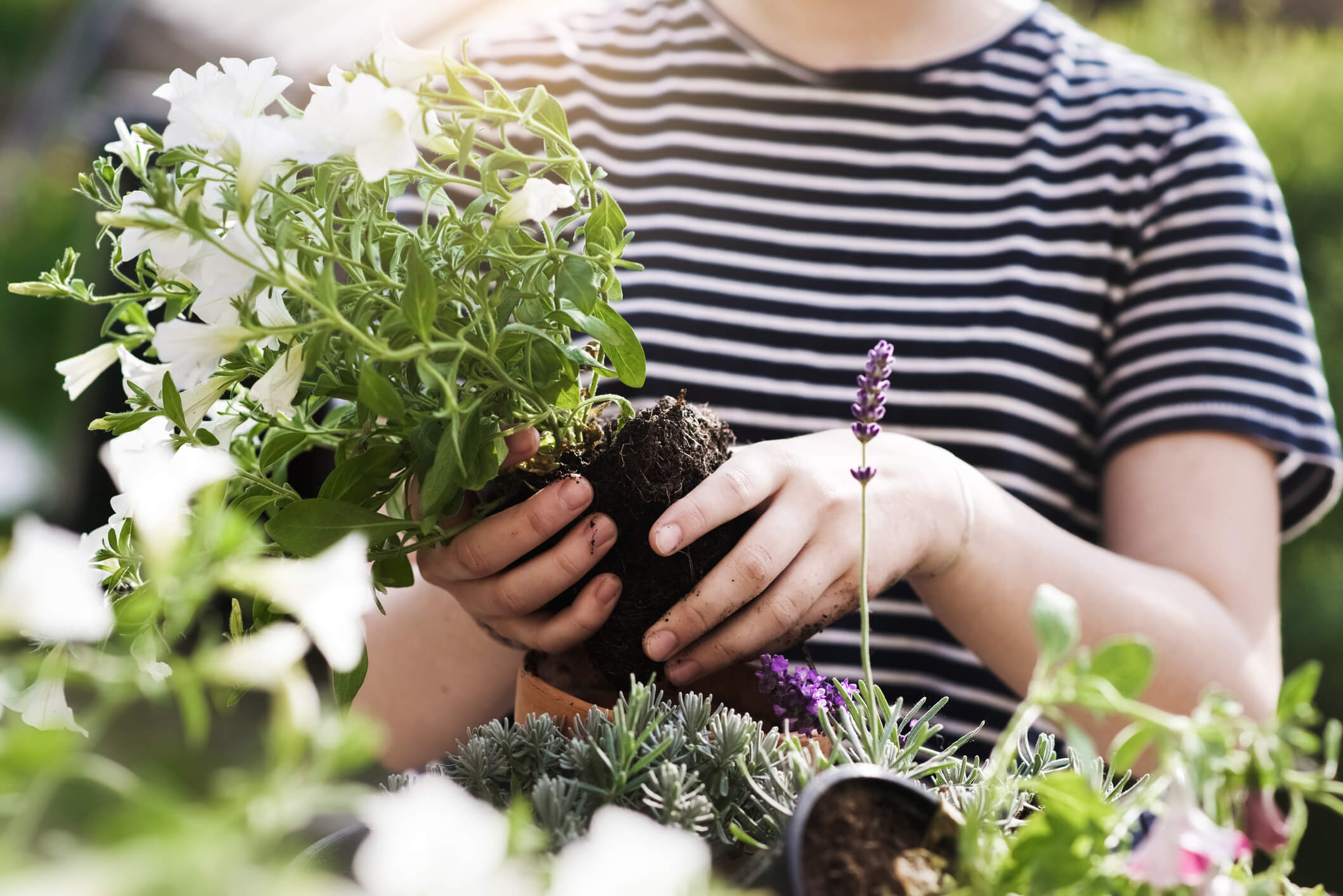 how to care for plants in summer